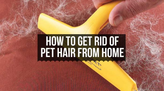 How to Get Rid of Pet Hair from Home