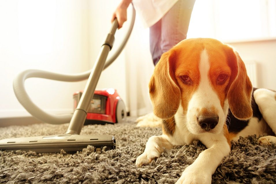 best carpet cleaner rental