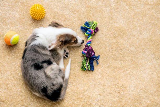 Pets Comfort On Cork Floor
