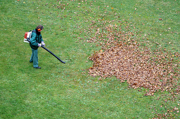 leaf-blowers-noise-pollution