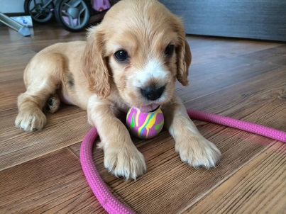 pet friendly laminate flooring